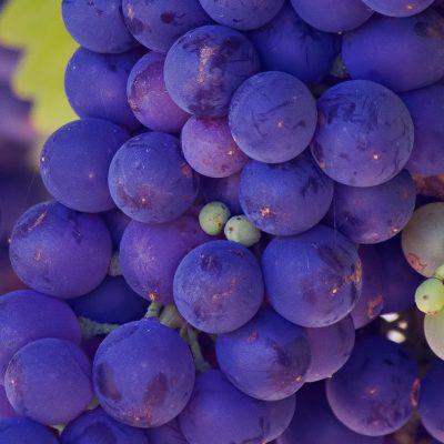 CF2018_Blog_Header_wine